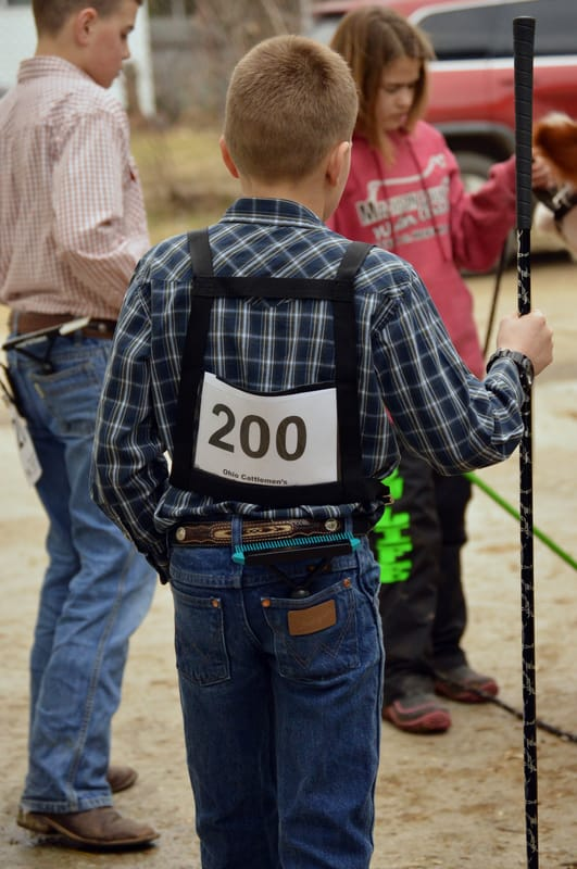 young cattle showman