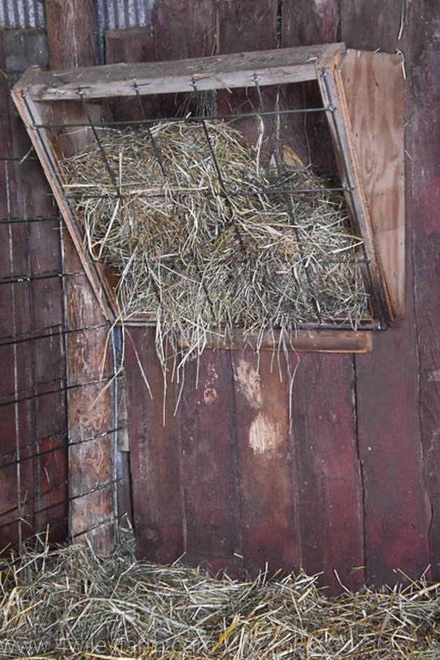 DIY hay feeder made with cattle panel
