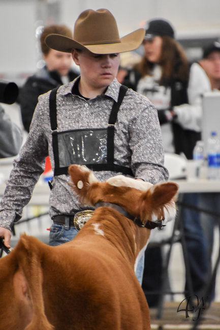 Isaac Wiley showing his Miniature Hereford during a B.E.S.T. show